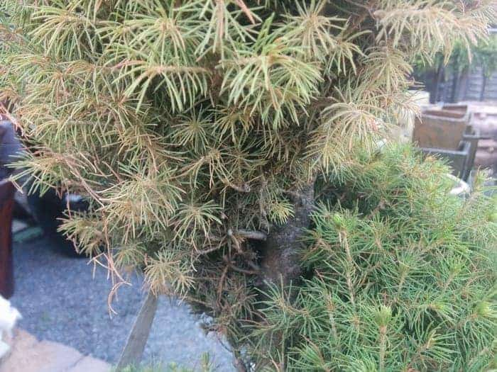 Why Not To Use Pruned Topiaries On Your Front Porch