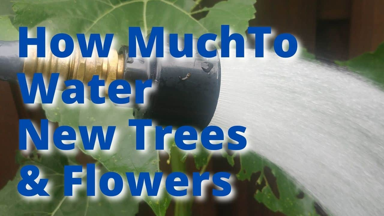 How Much water New Plants