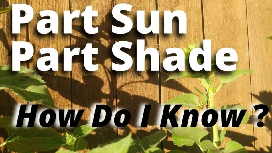 click to learn part sun part shade