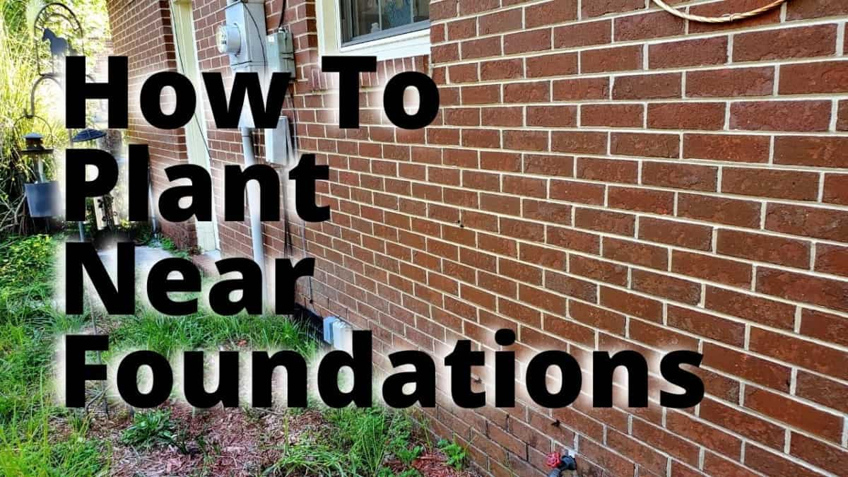 How to plant near foundations